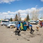 Dogs greeting the Mongolian tourists.