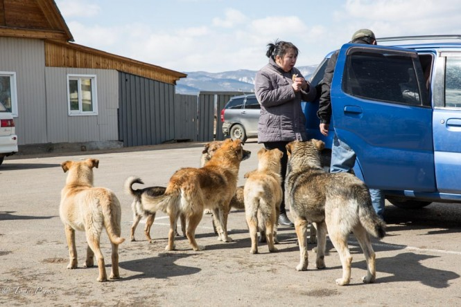 Mongolian tourists looking for food to feed the dogs standing outside the Datsan.