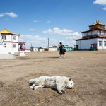 A dog catching some rays inside the Datsan territory as two temples can be seen in the background.
