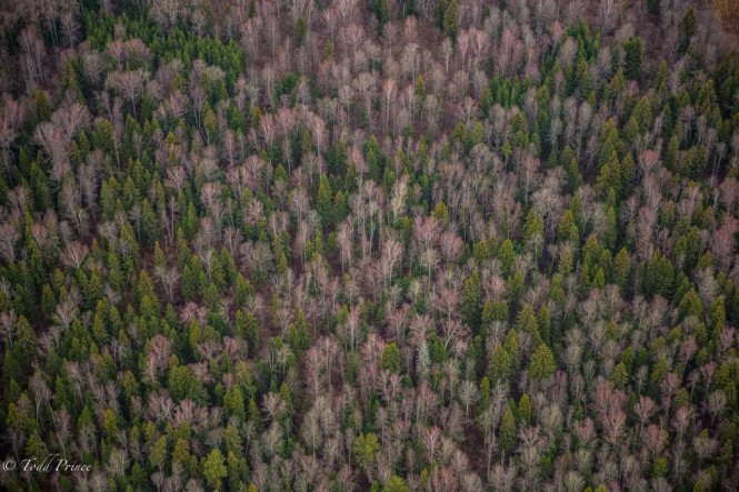 The autumn forests outside Moscow as seen from about 600 meters.