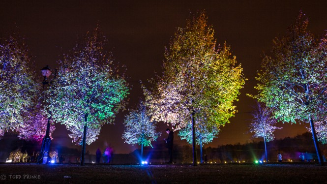A walkway lined with trees is lit up in various colours at Tsaritsino Park.