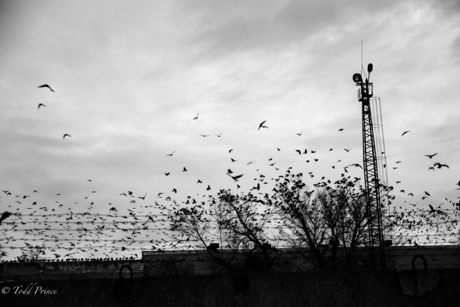 Birds flying from what appears to be an abandoned building.
