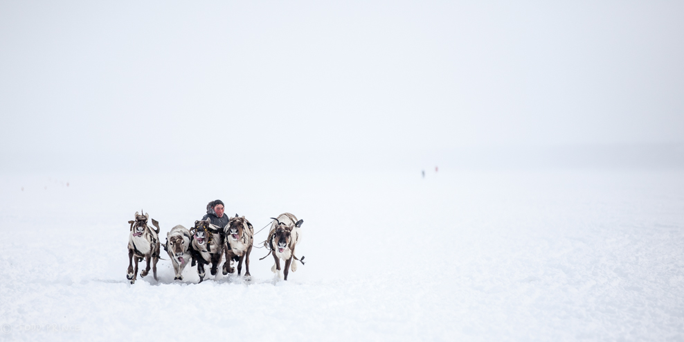 Ethnic Reindeer Competition in Russian Arctic