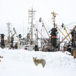 Dogs guarding the ships in Poronaysk.
