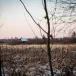 A lone house that can be seen in a so-called 'dying' village through the trees in Vladimir region.